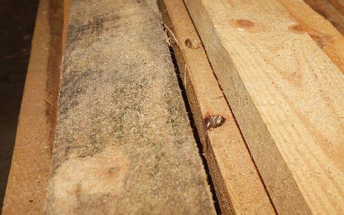 otbelivanie-drevesiny-01