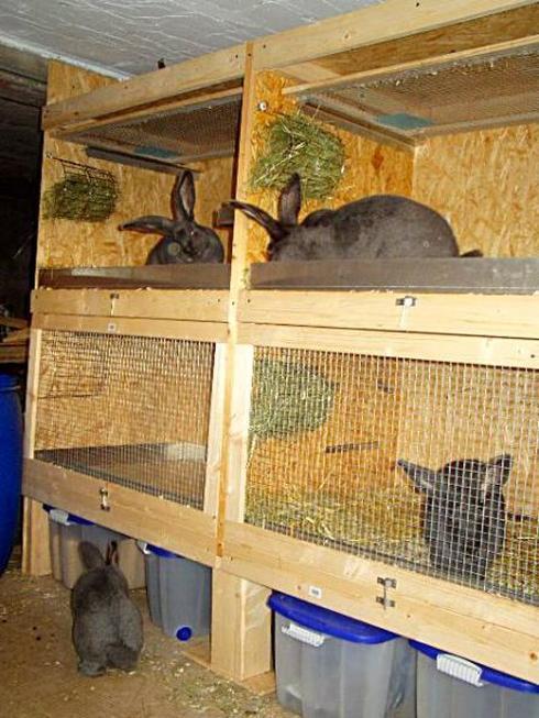 Кролиководство для начинающих клетки своими руками фото