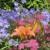 mnogoletnie-cvety_9