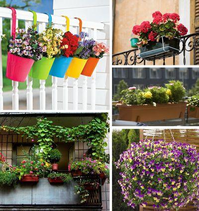 цветы на балкон несолнечная сторона Провинциалка