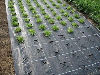 Как посадить